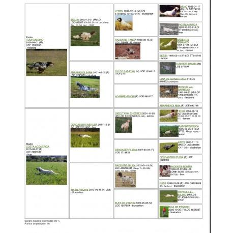 Setter ingles  1 año iniciado macho. Para y cobra muy bien perro con mucha  afición.
